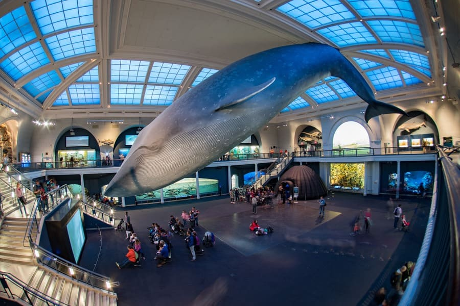 Tourist and children visiting natural history museum blue whale hall