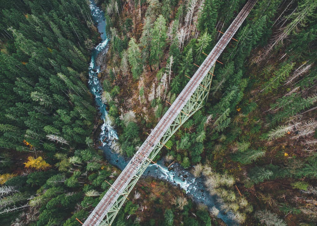 Tall Bridge in the middle of a forest