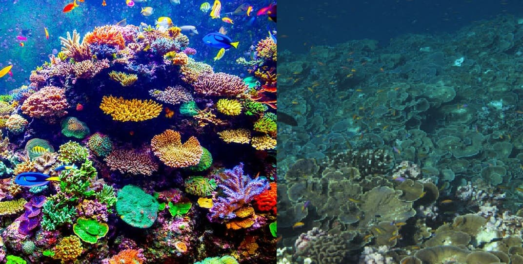 A coral reef before, it was colorful, and now it looks lifeless