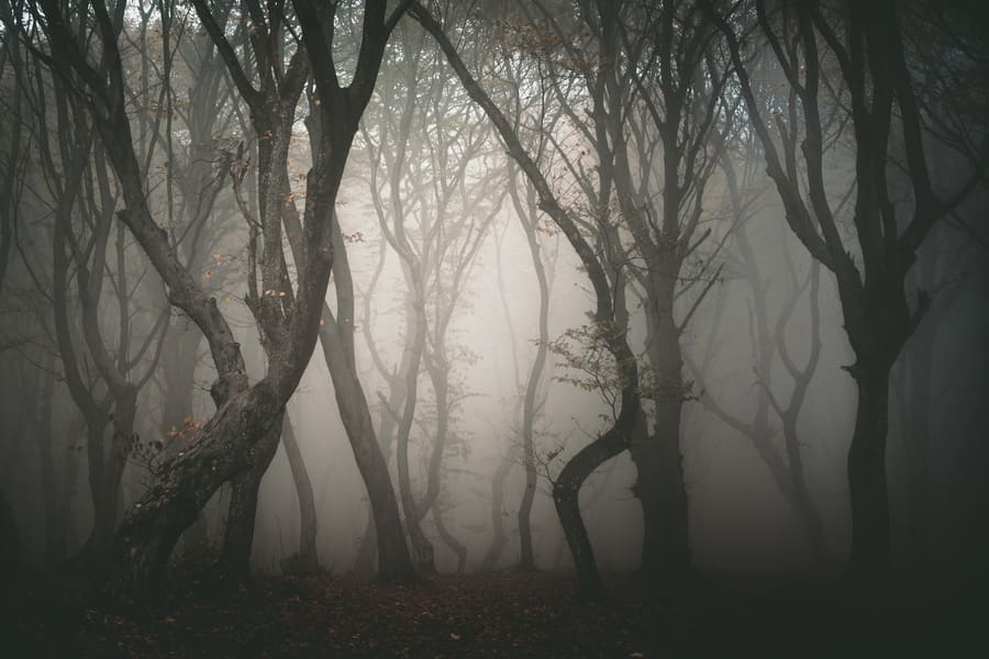 Hoia forest, one of the most haunted forests in the world.