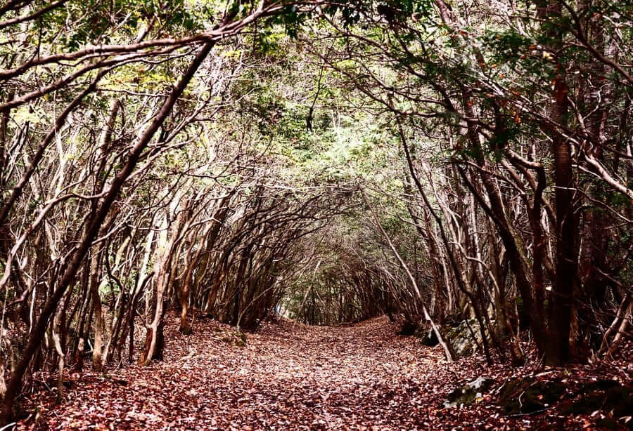 Tunnel trail at Aokigahara Forest in Japan. The forest has historical associations with demons in Japanese mythology and is, unfortunately, a popular place for suicides