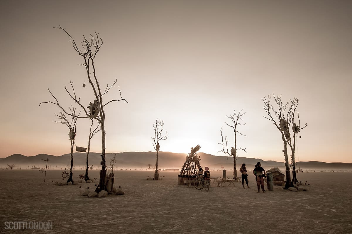 Sculptures of trees on the beach