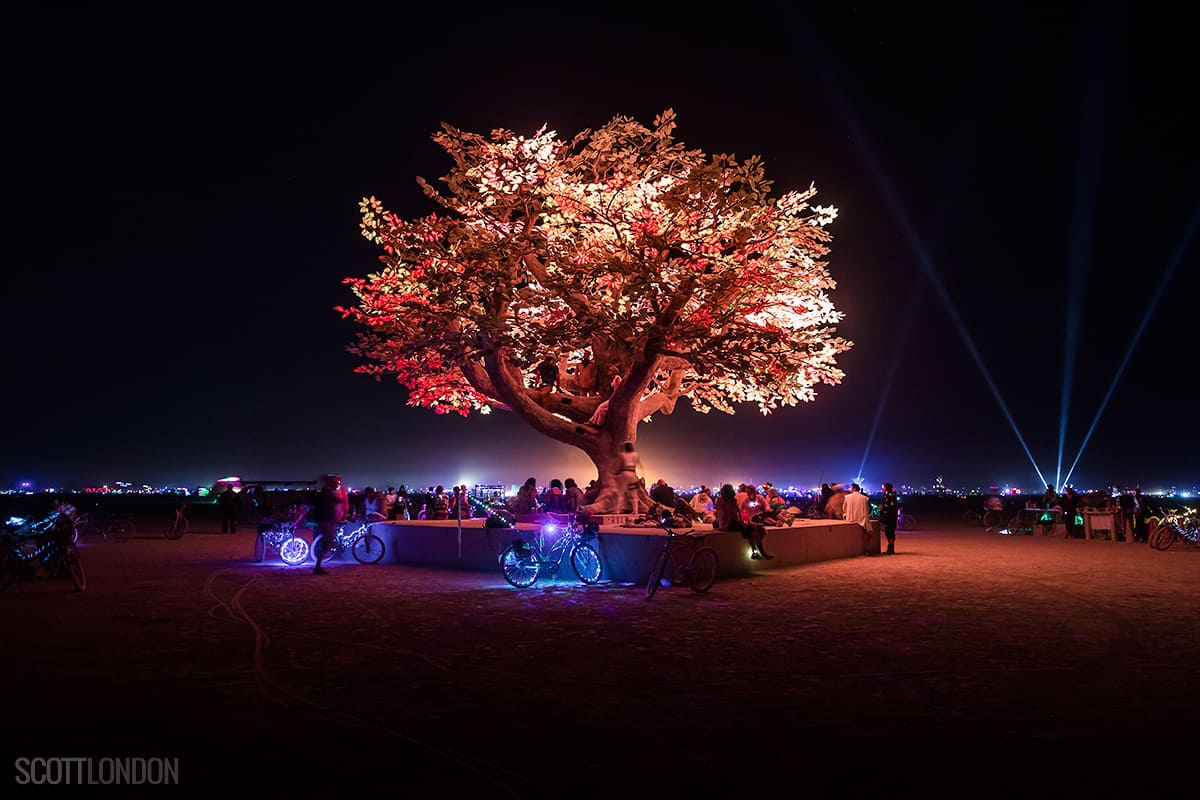 A tree-filled and surrounded by lights