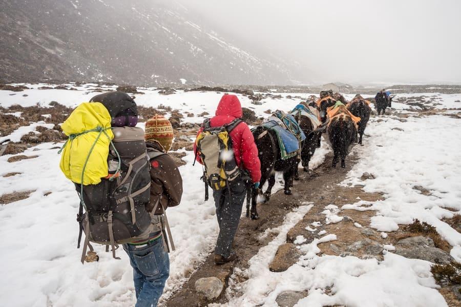 Trekkers, Sherpas, and yak shepherds