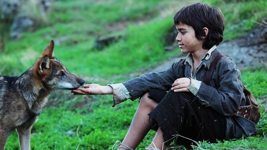 Small boy playing with a wolf cub