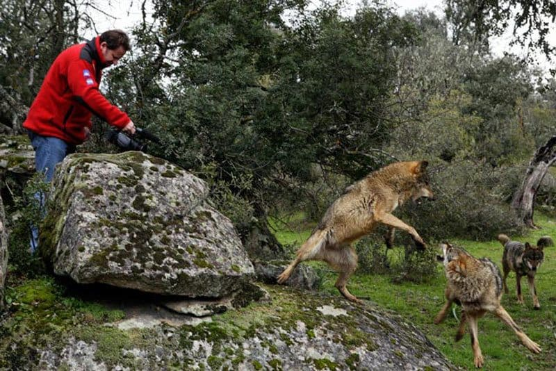 Marcos Rodriguez Pantoja and his wolf in the wilderness