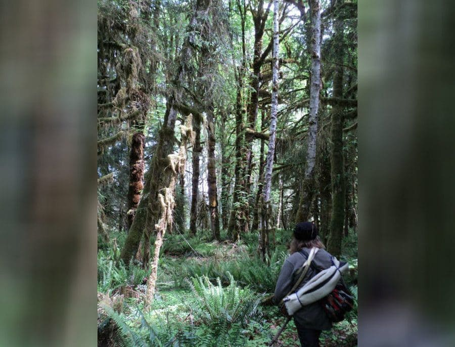 Mick Dodge is holding his travel gear on his back while walking through the woods.