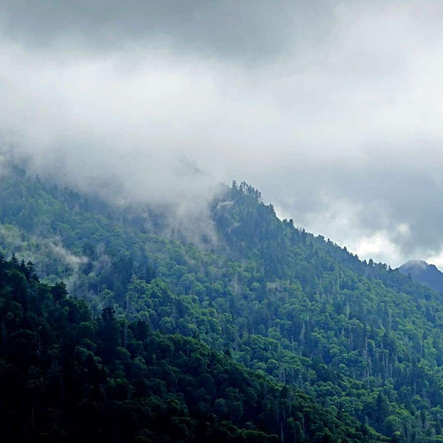 Mist covers the tops of the forest trees