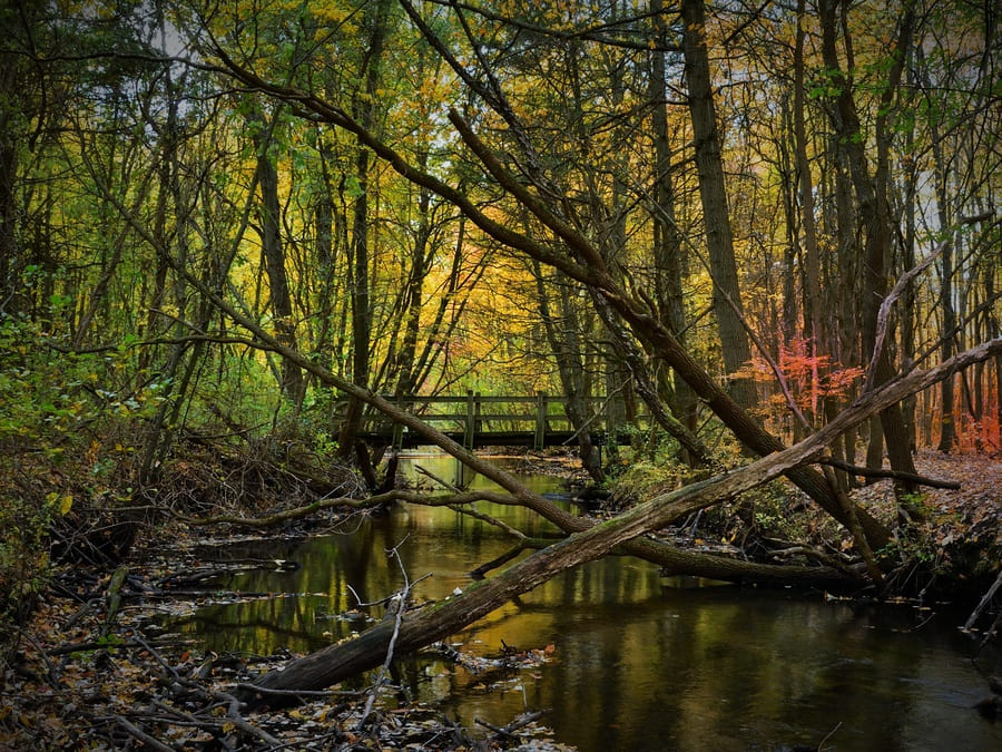 A creek surrounded by trees