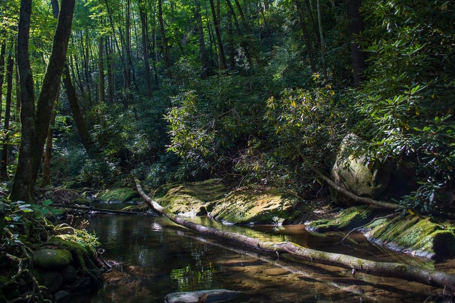 A stream in the Great Smoky Mountains National Park