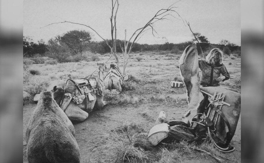 Robyn Davidson sitting with her camels, 1977