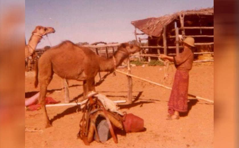 Robyn and her camels in 1977 at Dalgety Downs Station