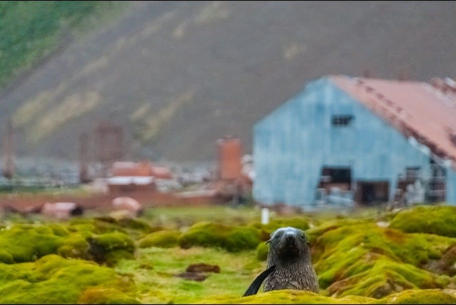 Impression of the abandoned whaling station at Stromness, South Georgia