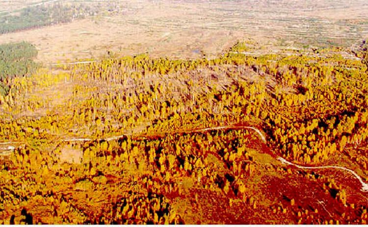 The forest surrounding the area turned red