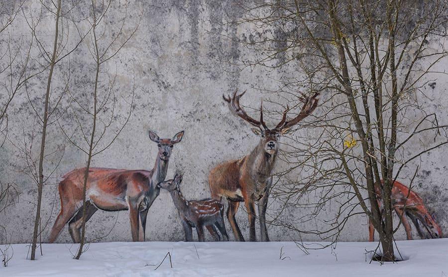 Wildlife graffiti of deer