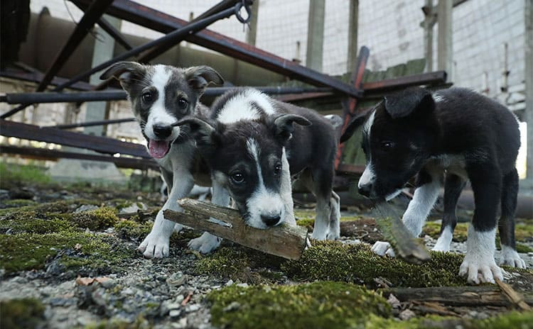 Radioactive puppies playing with bits of wood