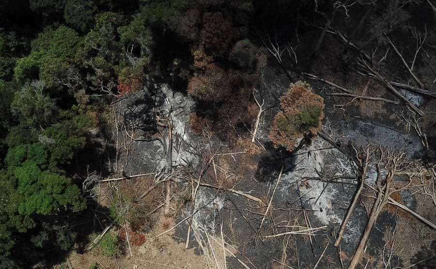 A drone view of the northern Mozambique forest