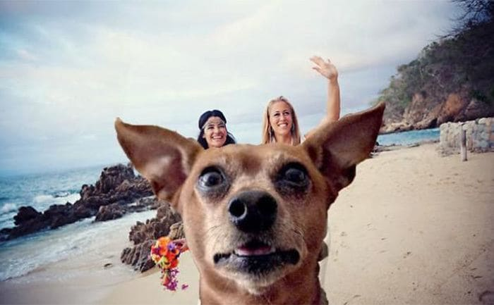 A small dog with two women standing behind him in a way that makes it look like they are riding the dog like a horse
