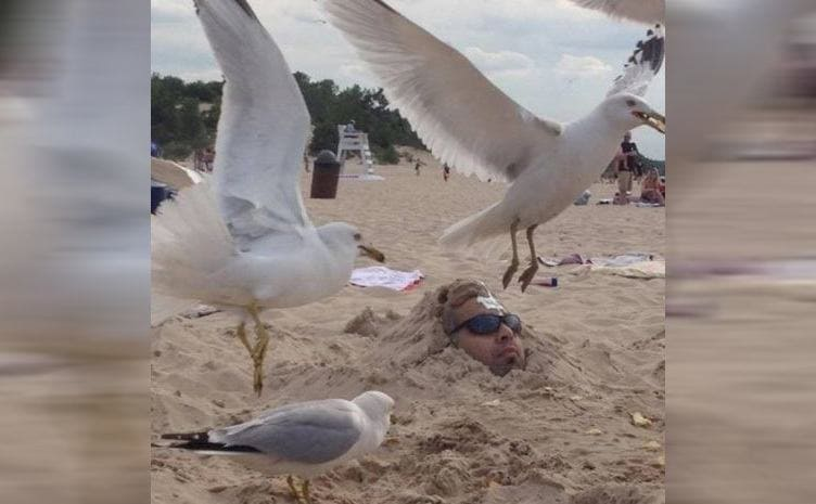 A man buried in the sand with a bird pooping on his head
