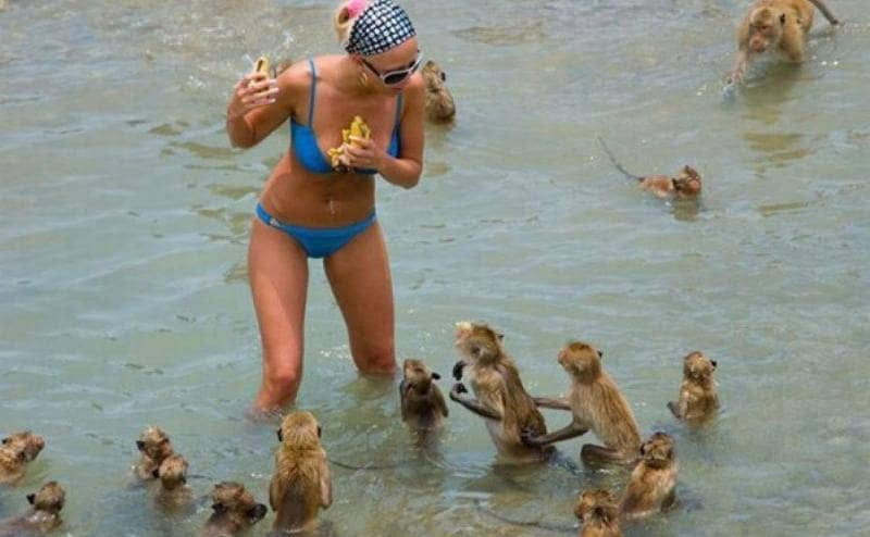 A woman surrounded by tiny monkeys while holding food