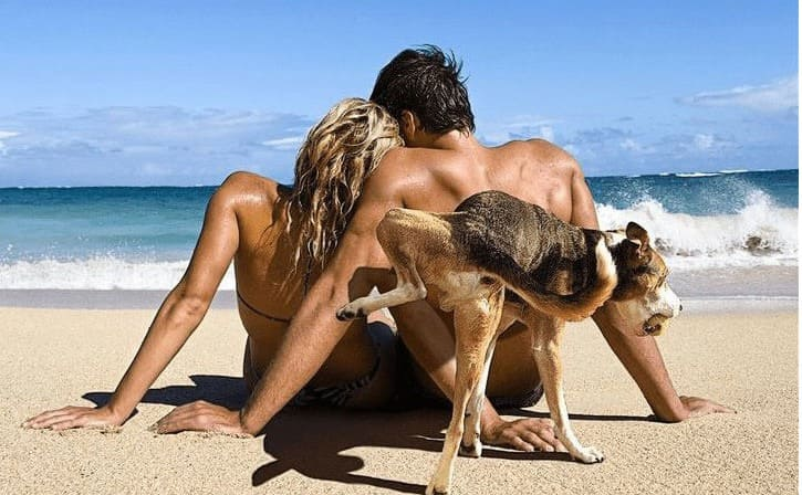 A couple sitting on the beach together and a dog behind them with his leg up