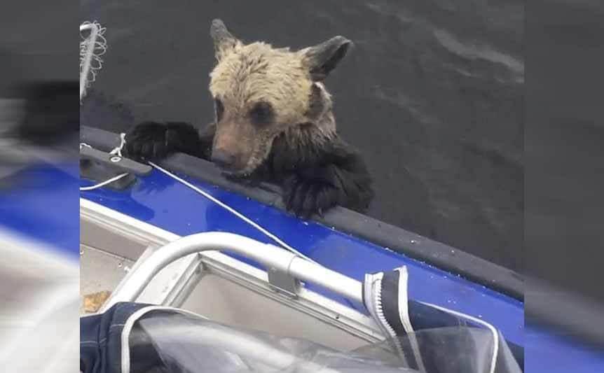 A bear peeking his head onto a boat