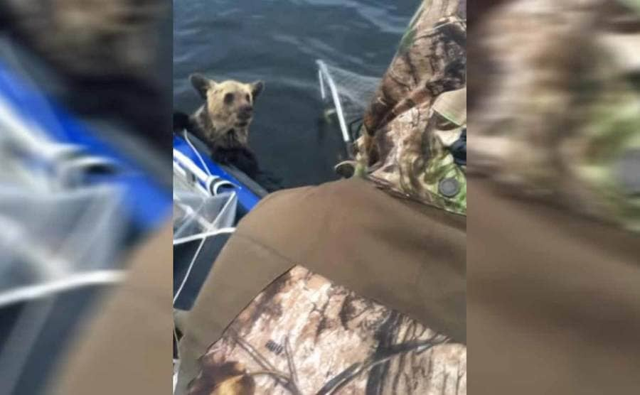 A bear hanging on to the boat with a large net behind him