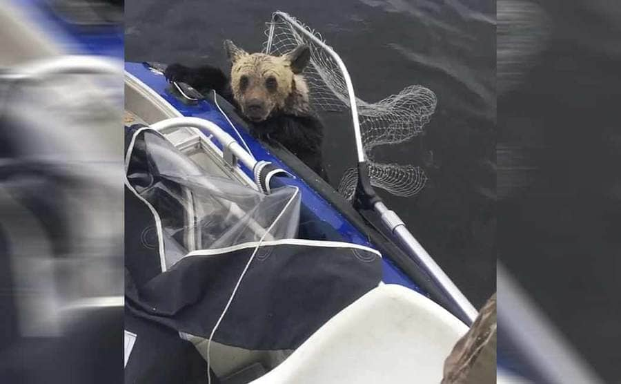 A bear holding onto the boat with a net behind him