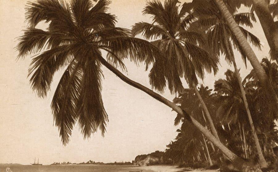 Coconut palms on a shoreline