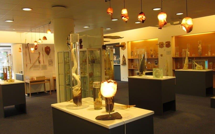 Iceland's Phallus Museum