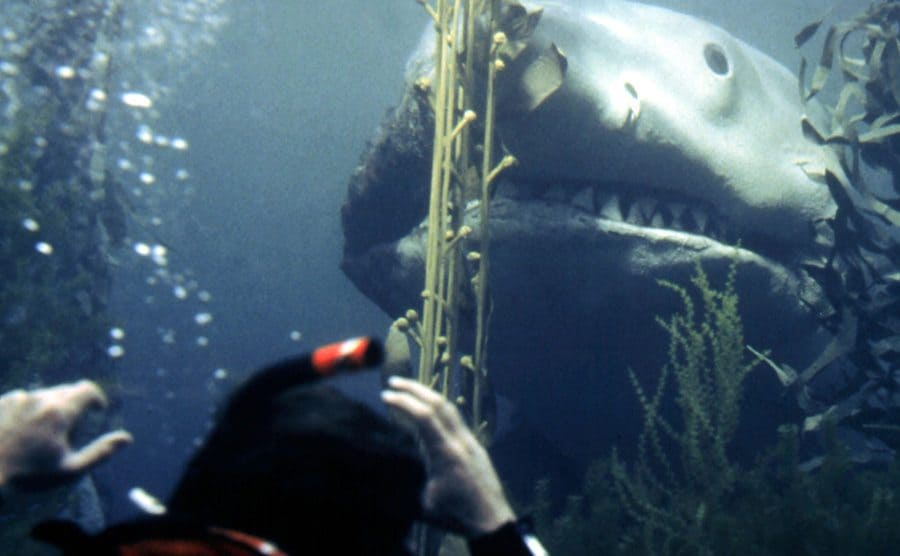 The back of a diver's head with a shark coming towards him