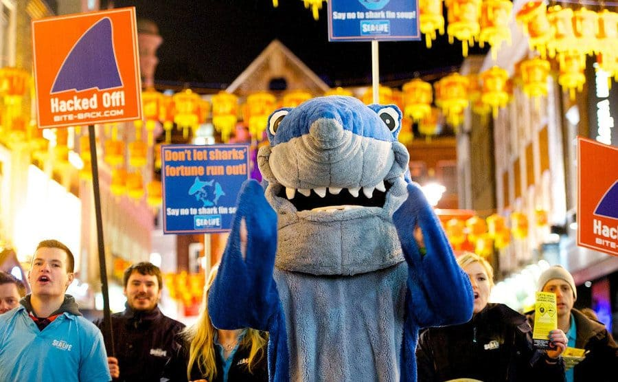 A guy in a shark costume in front of protestors holding signs to save the sharks