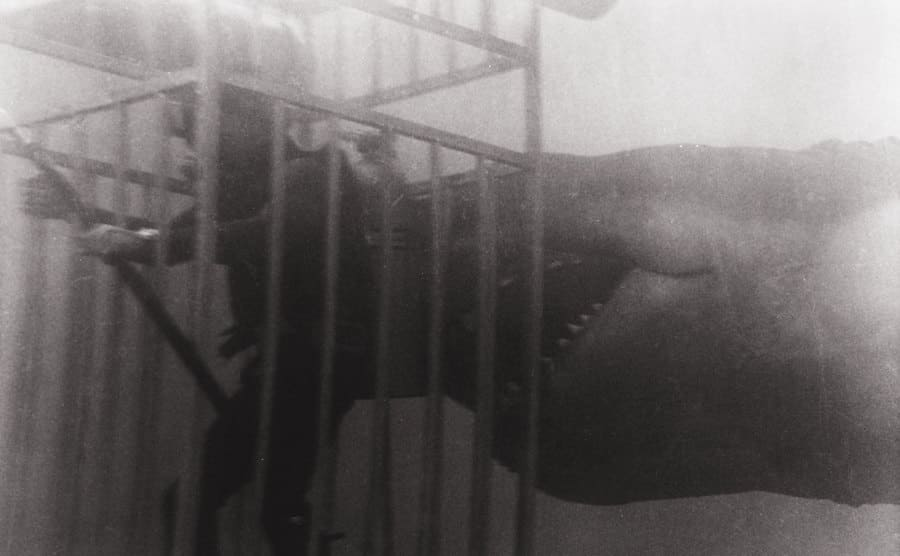 A shark going for a cage with a diver inside