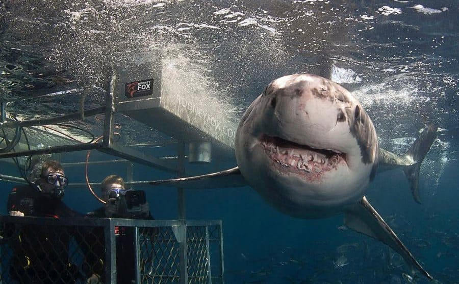 Rodney Fox in a metal cage with a great white shark speeding by