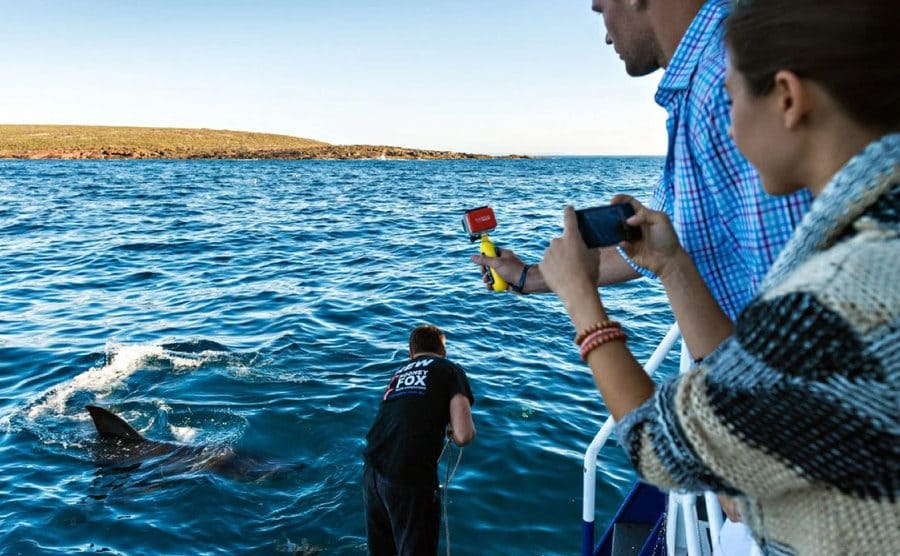 A worker placing something in the water near sharks with tourists filming from on the boat