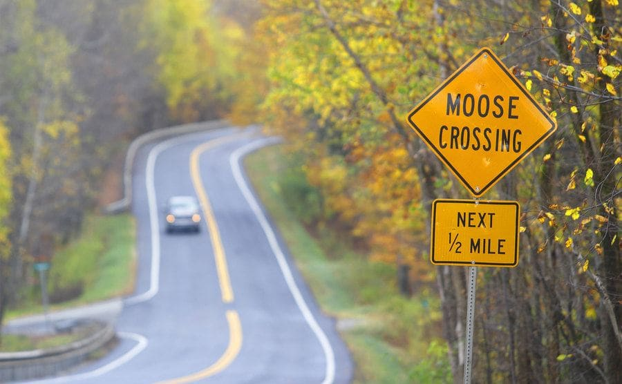 A moose crossing traffic sign on the side of a forrest road.