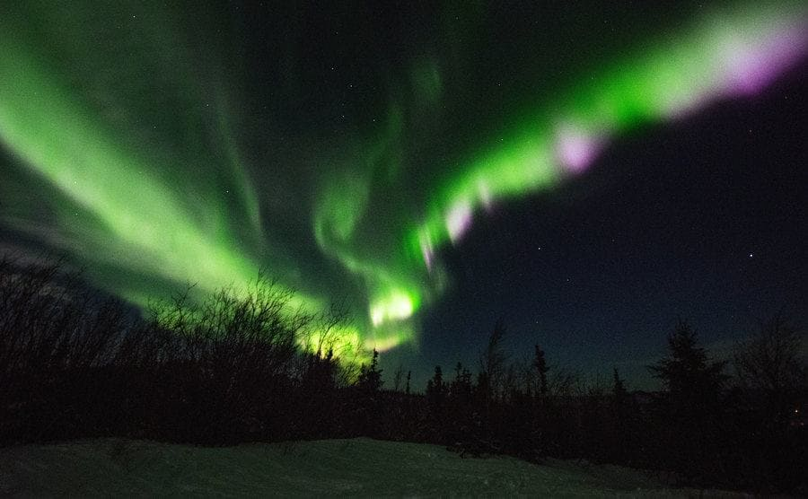 The Aurora Borealis appears in the sky over the forrest.