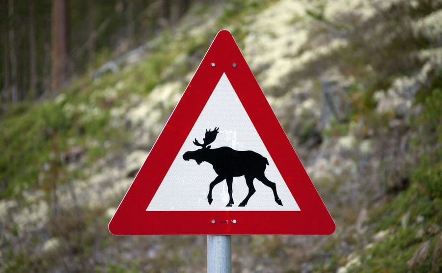 A warning sign for moose crossing the road.