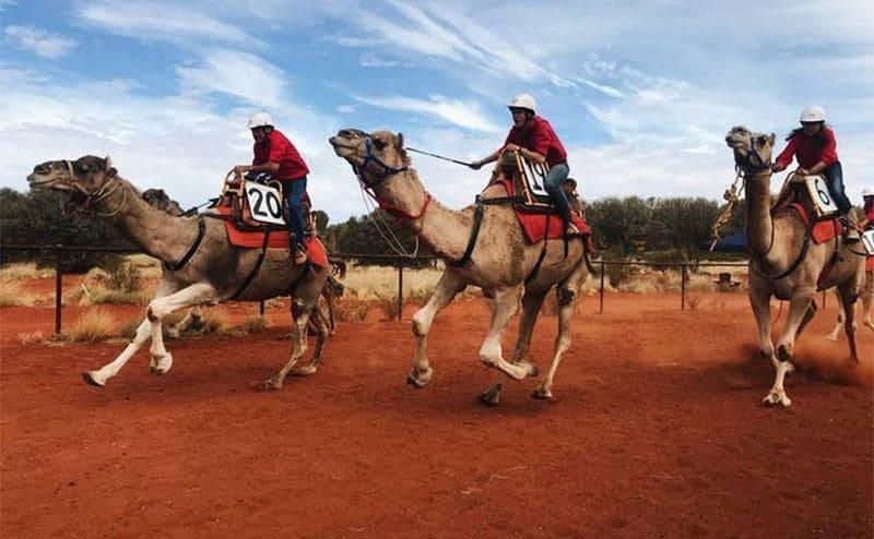 Men racing on camels backs in the desert