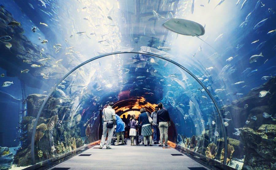 People walking through a tunnel aquarium in Dubai