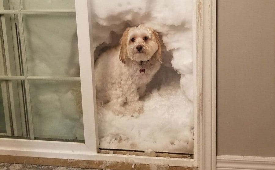 A small dog managed to carve out a small section of the snow piled up against the sliding door.