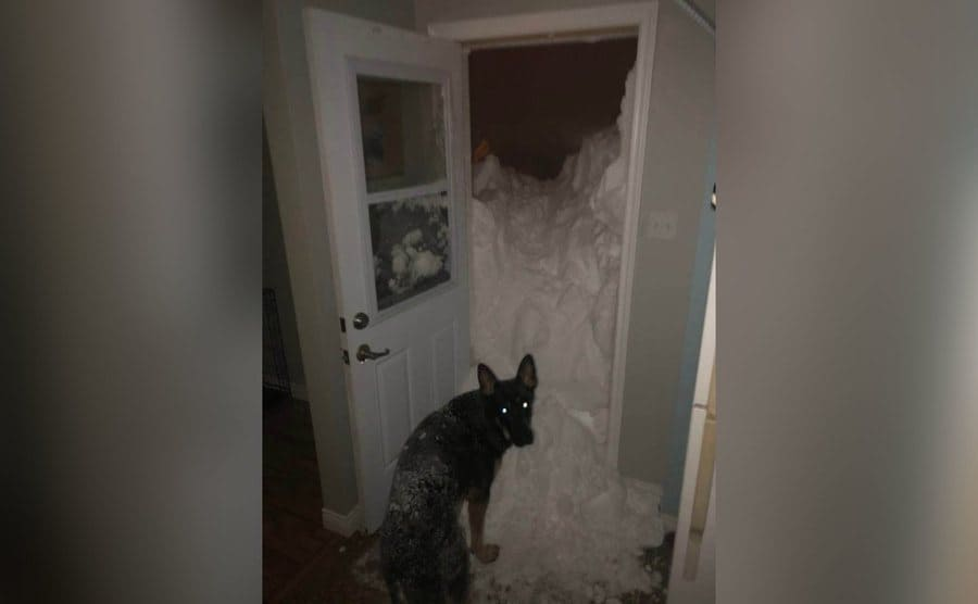 A large dog is standing in front of the open door with snow pouring in.