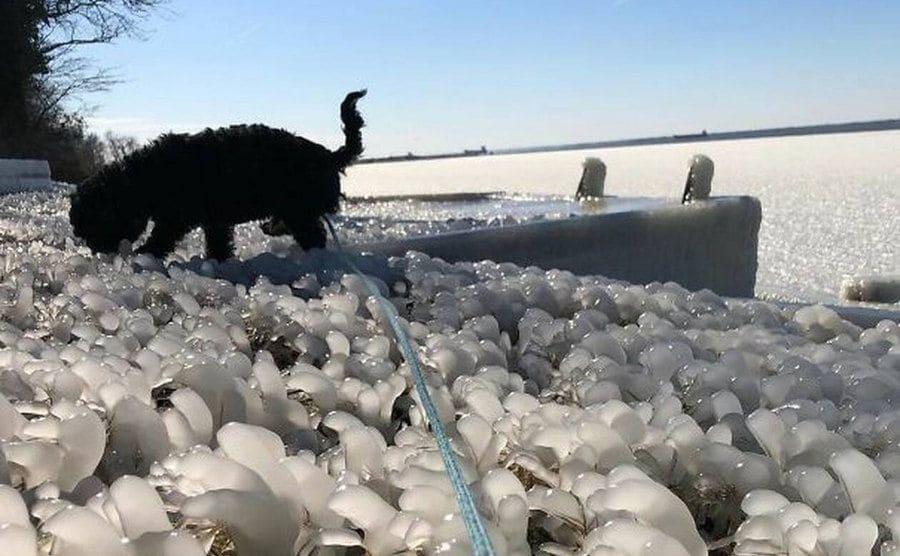 A dog walking in a frozen grassy field.