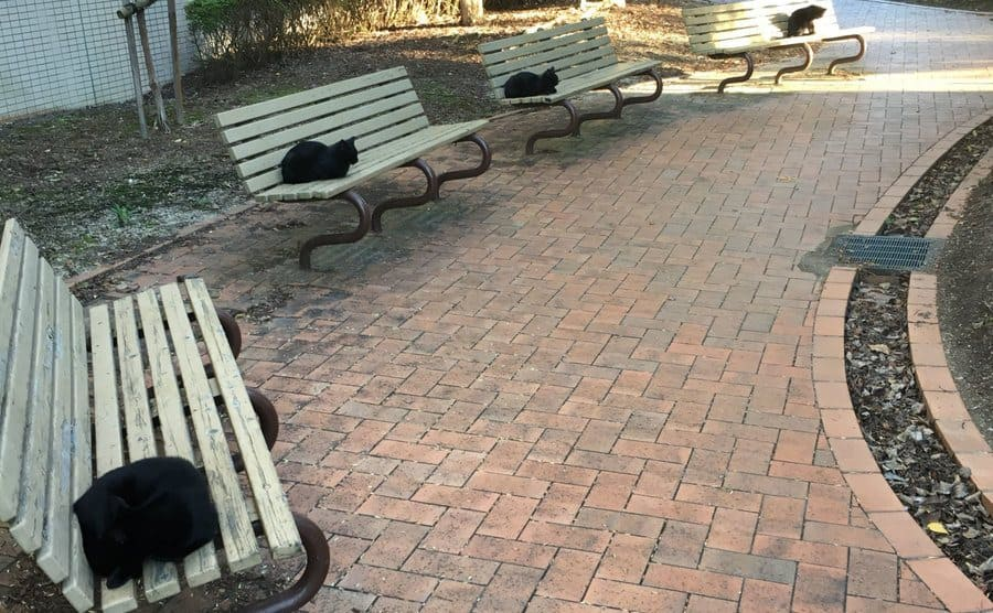 Four black cats are sitting on four separate benches in a park.