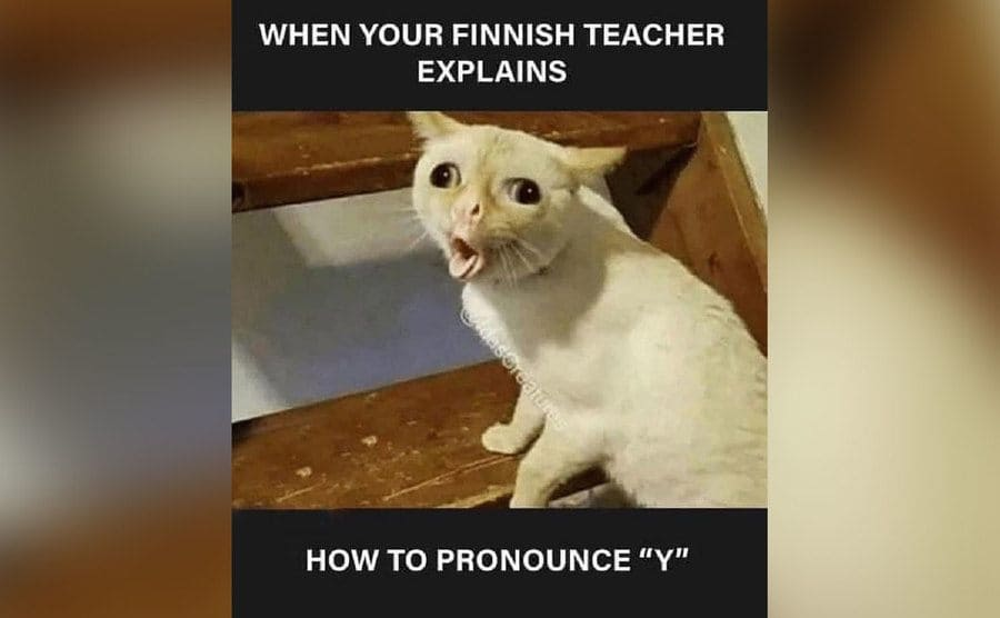 A meme of a cat making a funny expression.