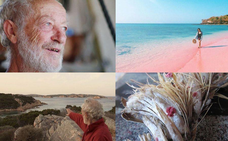 Mauro Morandi / Pink beach / Mauro Morandi / Miniacina miniacea