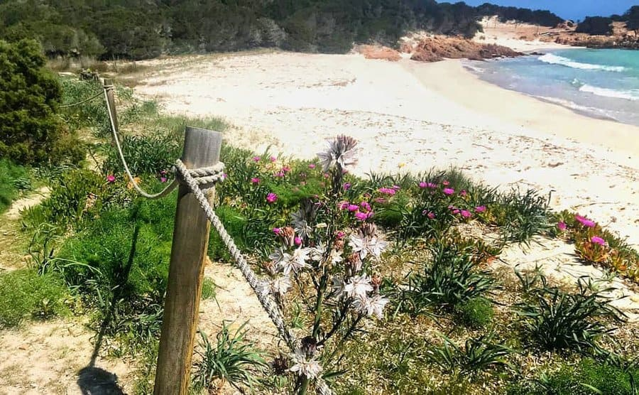 A view of the beach with the blooming flowers crouching in from the green path behind it.
