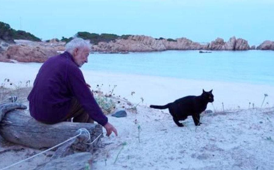 Morandi is sitting on the beach while trying to play with his black cat.