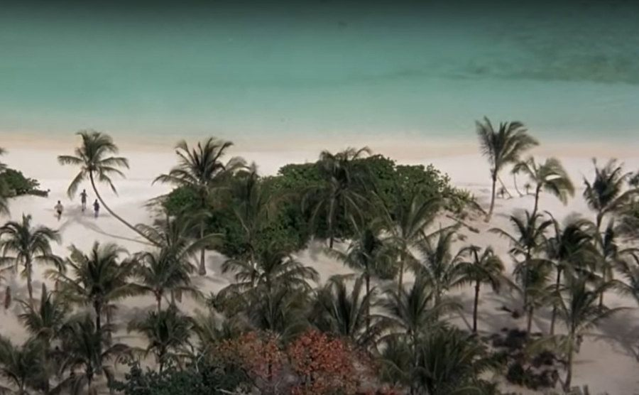 An aerial view of the palm trees at the beach.