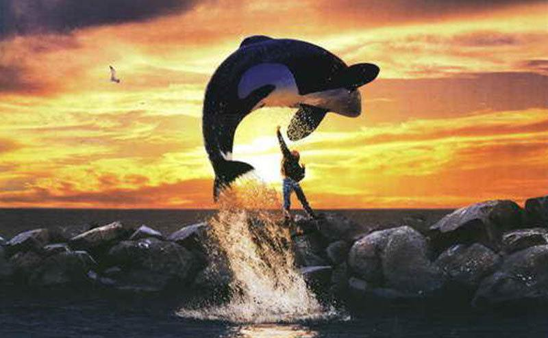 The Free Willy DVD cover.